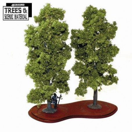 2x Mature Beech Trees