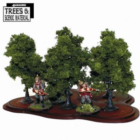 5x Young Ash Trees