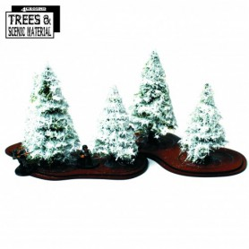 5x 90mm-130mm Young Winter Firs