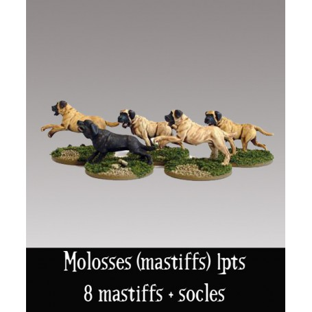 Molosses (mastiffs)