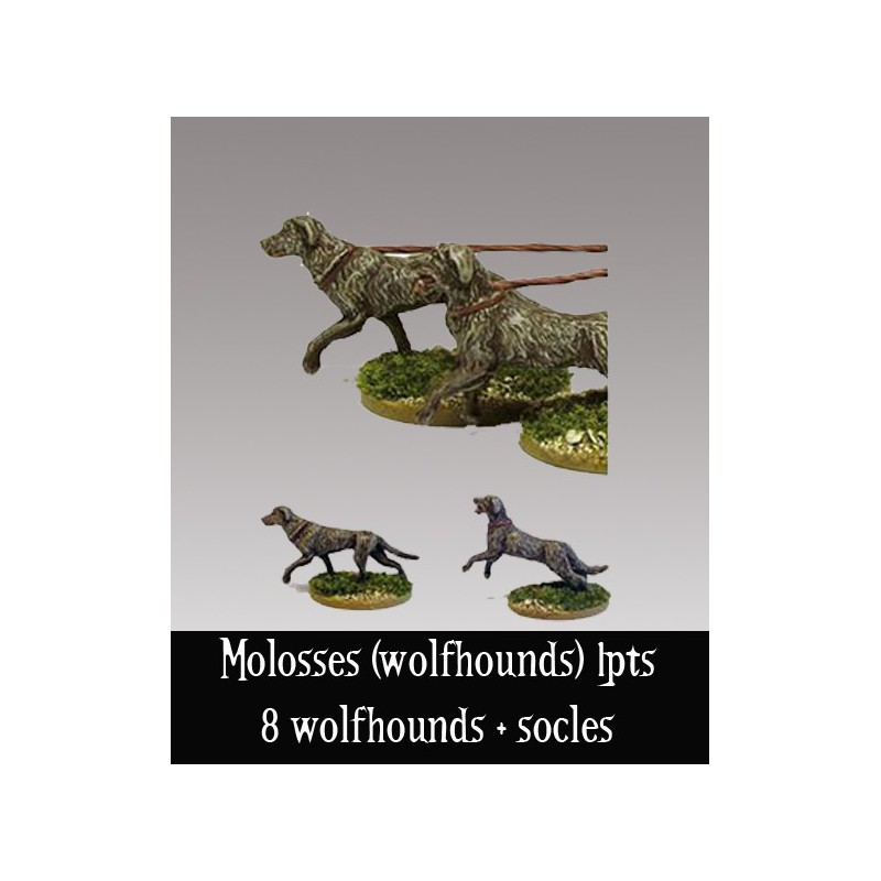 Molosses (wolfhounds)